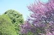 Leinwanddruck Bild - Bäume im Frühling