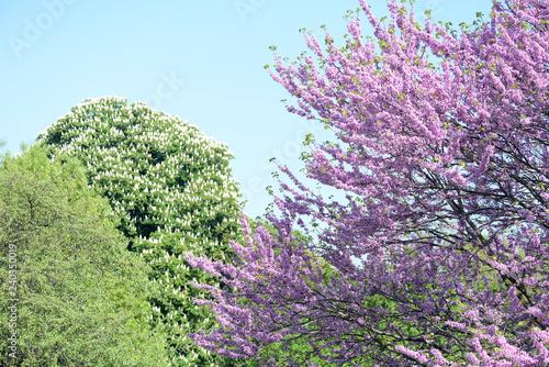 Leinwanddruck Bild Bäume im Frühling