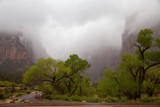 Zion National Park in the Rain © walkingarizona