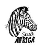 Sketch of zebra. Hand drawn illustration converted to vector © more_stock