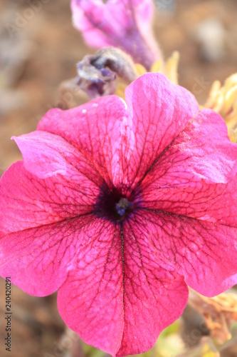 closeup of a flower - 240420291