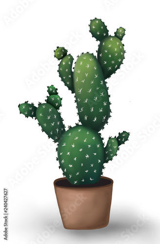 Cactus closeup isolated on white background. - 240427627