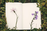Top view of wildflowers and gathered herbs on paper notebook on blueberry bushes in mountains. Summer travel essentials in mountains. Herbarium. Space for text - 240430837