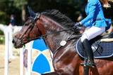 Brown horse head portrait galloping in a jumping tournament.. - 240454401