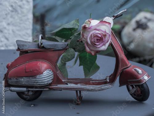 Scooter et rose