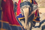 Decorated elephants in Jaleb Chowk in Amber Fort in Jaipur, India. Elephant rides are popular tourist attraction. Selective focus. - 240477048