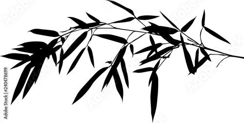 one black long bamboo lush branch