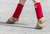 Hooves of a circus horse on asphalt