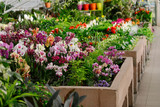 orchids in the store of plants of different colors and varieties selling flowers in pots grow orchids care arangery shop © Elena