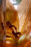 Lilie in kristallklarem Eis 2