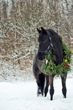 black horse with christmas wreath. winter © anakondasp