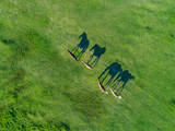 Top view of grazing horses in field