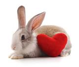 Rabbit and heart.