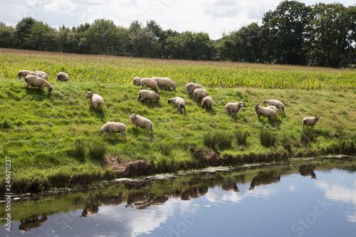 obraz PCV Landschaft in Niedersachsen