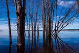 Beautiful submerged trees by riverside with reflections, rocks and blue sky in spring. - 240696230