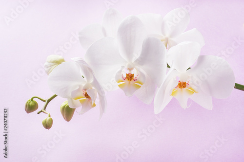 White Orchid flowers on pink background. concept Valentine's day