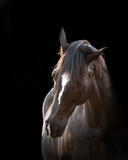 Fine Art Equine Portrait © Hilary