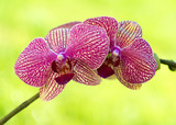 Pink orchids with soft bokeh background