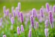 Leinwanddruck Bild - Frühlingsblume und Blüte auf Wiese
