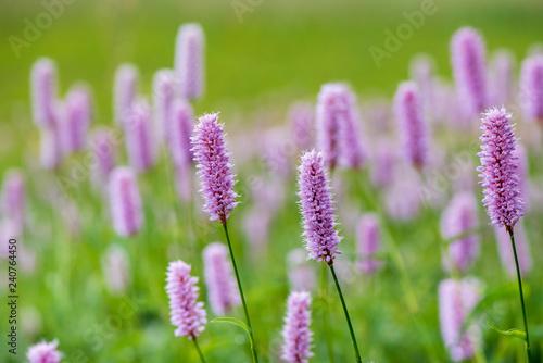 Foto Murales Frühlingsblume und Blüte auf Wiese