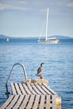 Cormorant on an old swimming pier. © MaciejBledowski