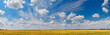 Panorama of the yellow wheat field with blue sky and some clouds. - 240780838