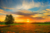 Summer sunrise over rural meadow