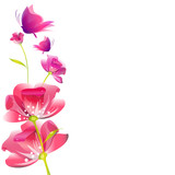 beautiful pink flowers, peony,watercolor,isolated on a white