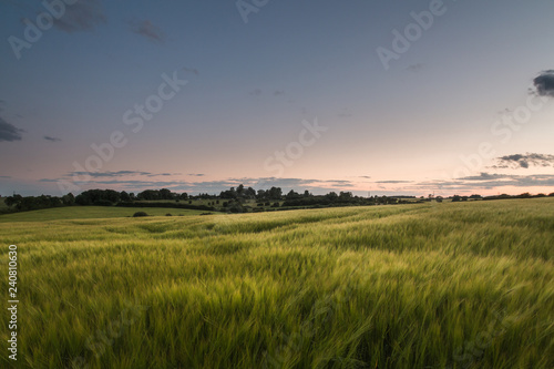 mata magnetyczna Beautiful Grass Meadow At Sunset