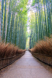 Fototapeta Bambus - Pathway through Bamboo forest in Kyoto, where is the landmark of Japan © Photo Gallery