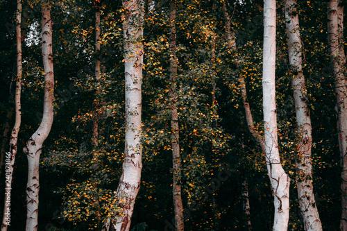 Dark Forest Edge