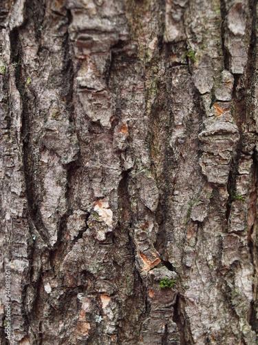 écorce d'arbre avec de belle textures crevassées - 240881261
