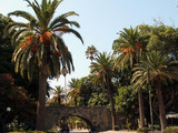 palm_trees - 240904494