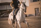 montando caballos andaluces en acción - 240910835