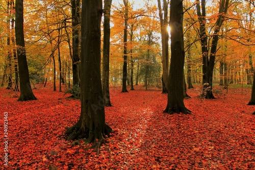 mata magnetyczna UK Autumn Woodland Rural Scene.
