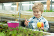 youth. concept of healthy youth with good future. youth in face of happy little boy hold fresh apple in greenhouse. youth and new life concept