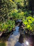 Plantes étang