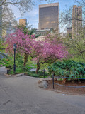 Central Park, New York City in spring - 240935848