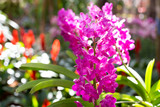 pink and purple orchid flower in the garden