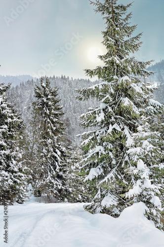 Солнечное зимнее утро в Карпатах. Дорога через зимний лес