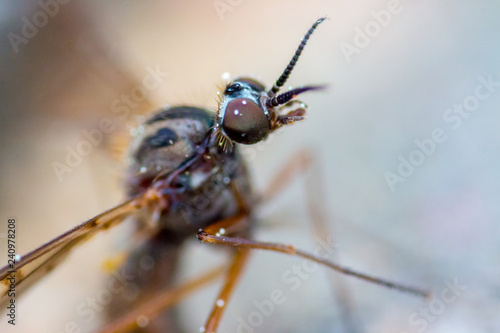 scary insect - 240978208