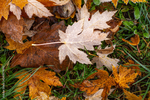 mata magnetyczna Autumn dry leaves on the ground in hoarfrost.