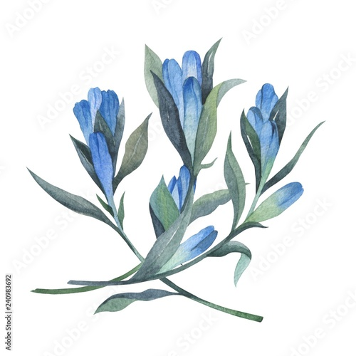 Floral arrangement in watercolor style. Beautiful compositions with gentian. Can be used as decoration for business cards, invitations and greeting cards - 240983692