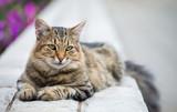 Gray kitten on the street - 241028811