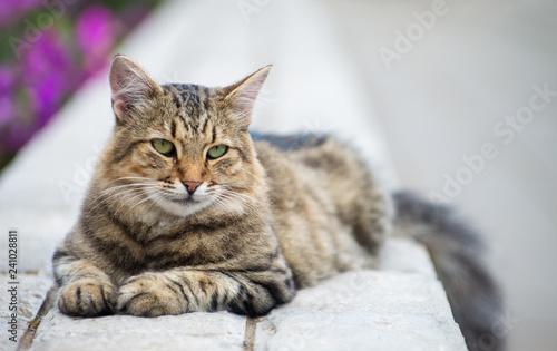 Gray kitten on the street