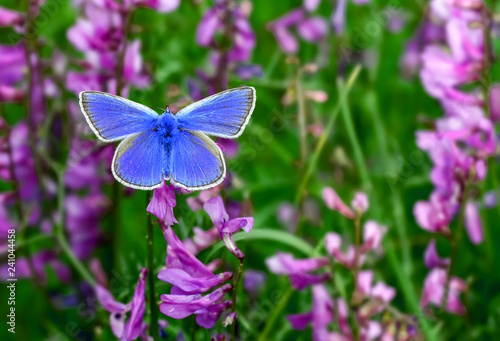 Beautiful butterfly & flower in the garden.