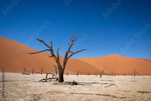 Dead_Vlei: a nature wonder in the Namian Desert