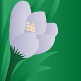 Spring flower on green background