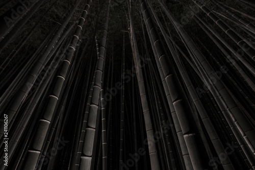 Dark photograph of the illuminated Arashiyama Bamboo Grove at night