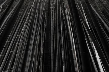 Dark photograph of the illuminated Arashiyama Bamboo Grove at night © marksteel